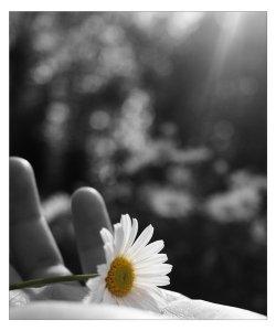 mano_fiore