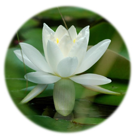 meditare-meditiamo